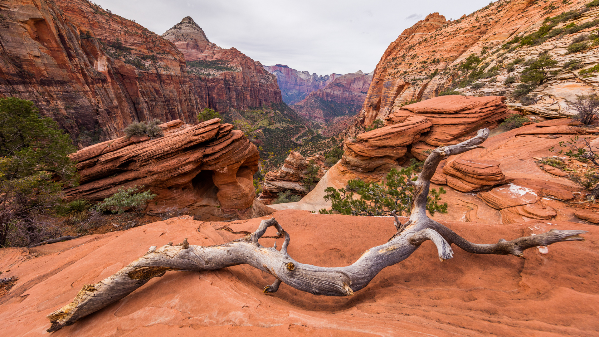 Watch Nature Documentary Film Zion National Park Prime Video