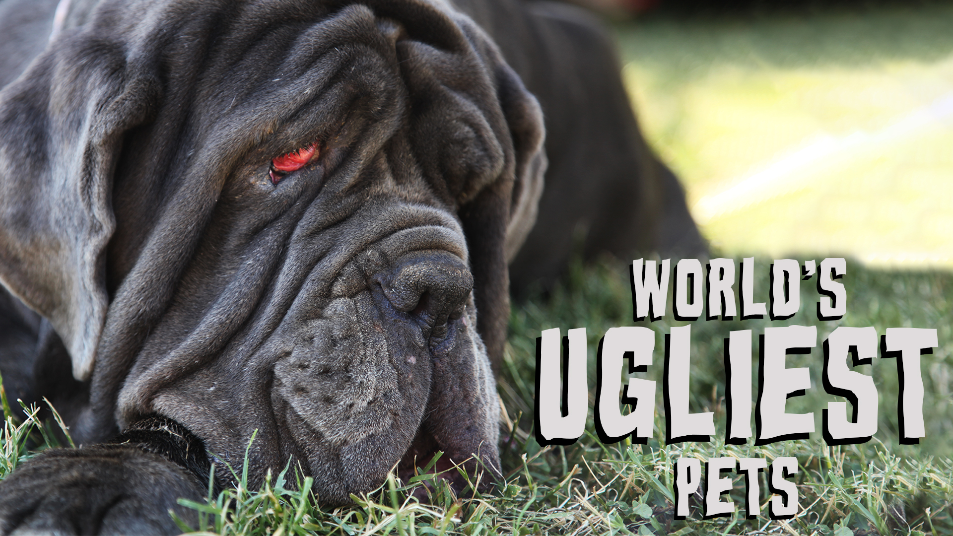 World's Ugliest Pets
