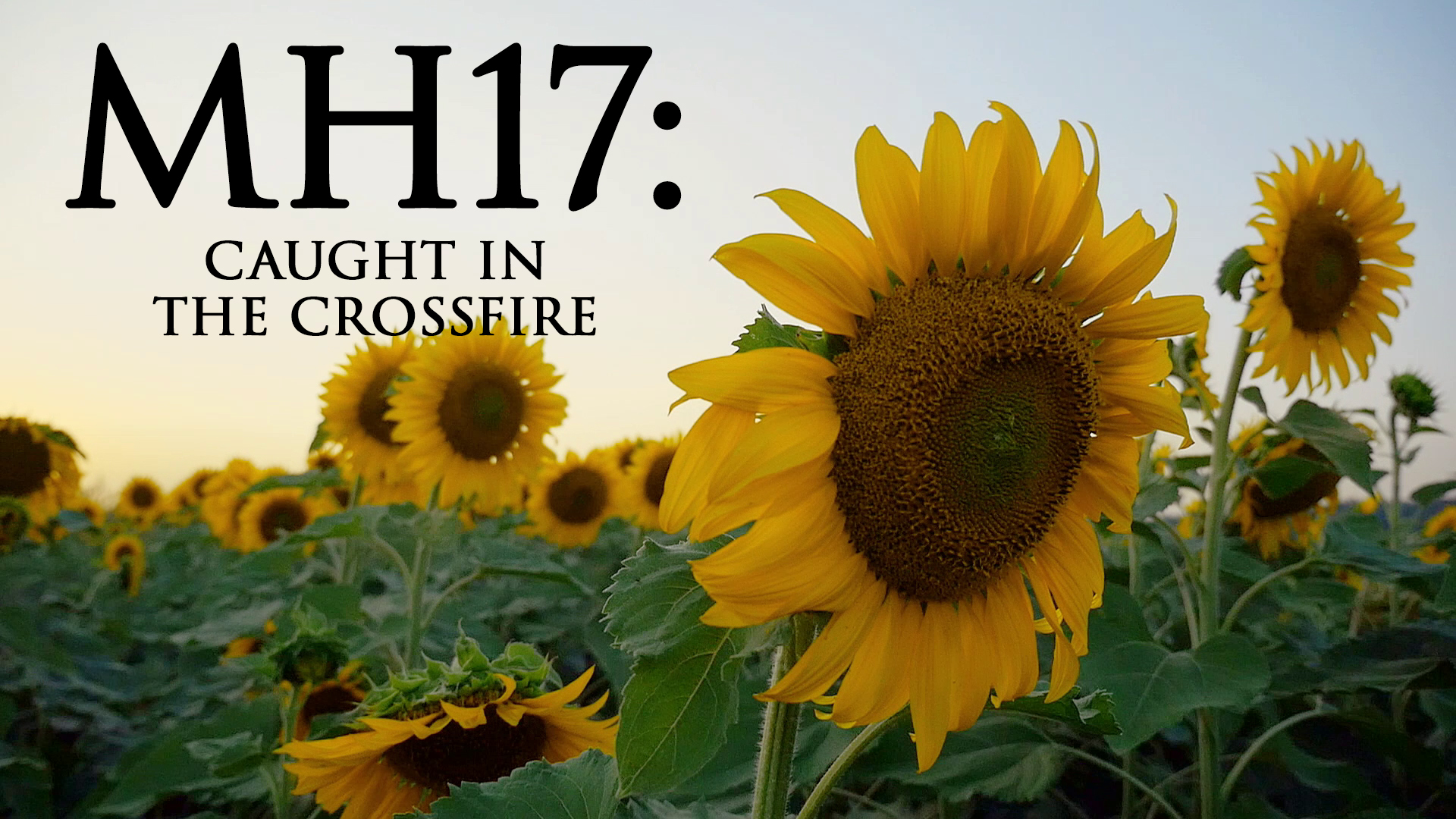 MH17: Caught in the Crossfire