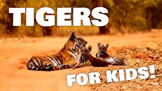 Tigers for Kids!
