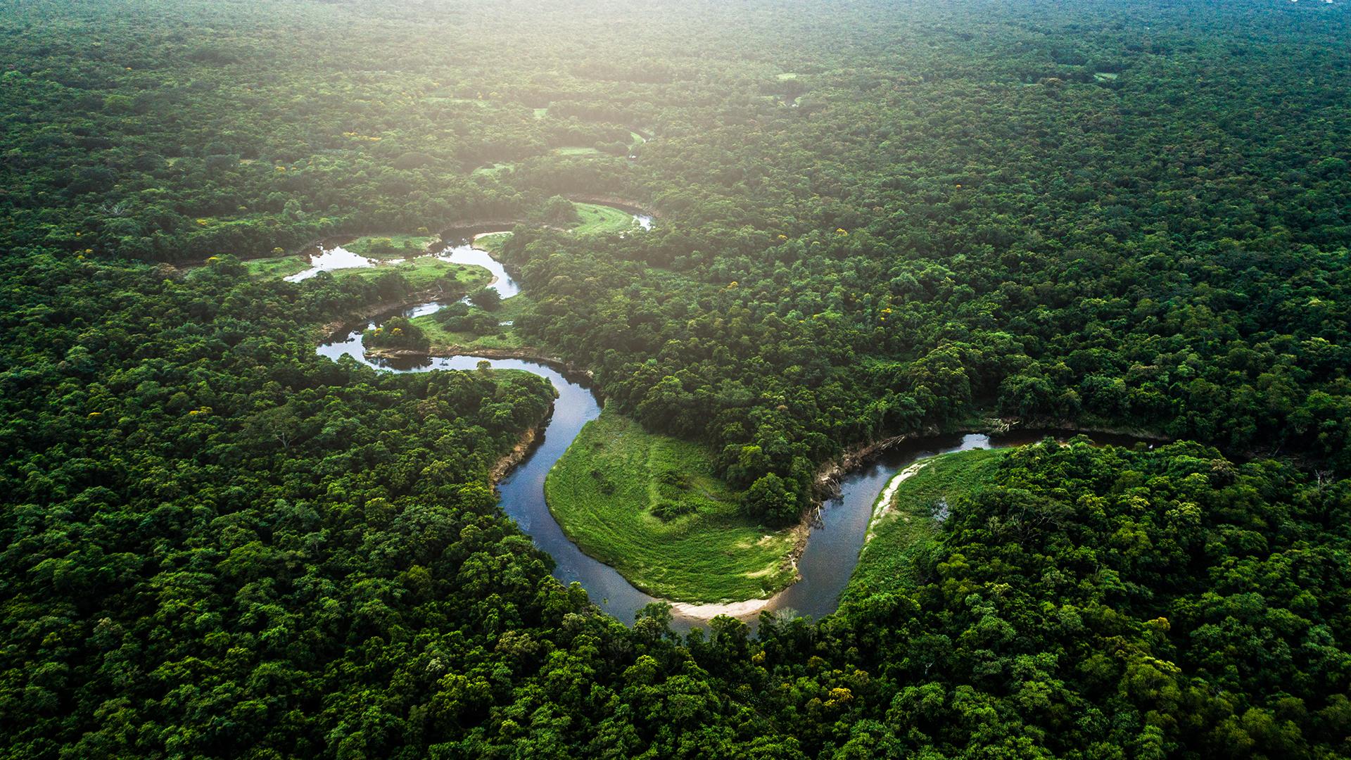 Watch Amazonia Inc   Prime Video