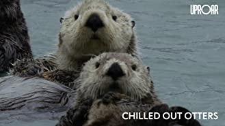 Chilled Out Otters