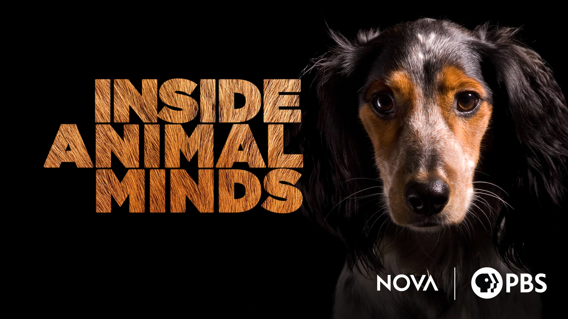 NOVA: Inside Animal Minds