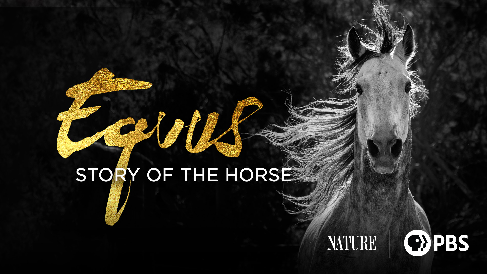 Equus: Story of the Horse, Season 1