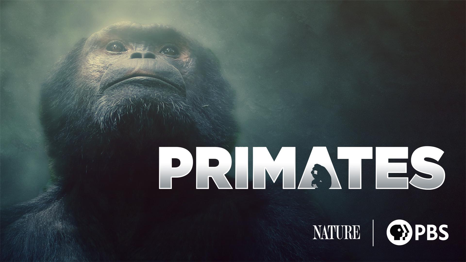 Primates, Season 1