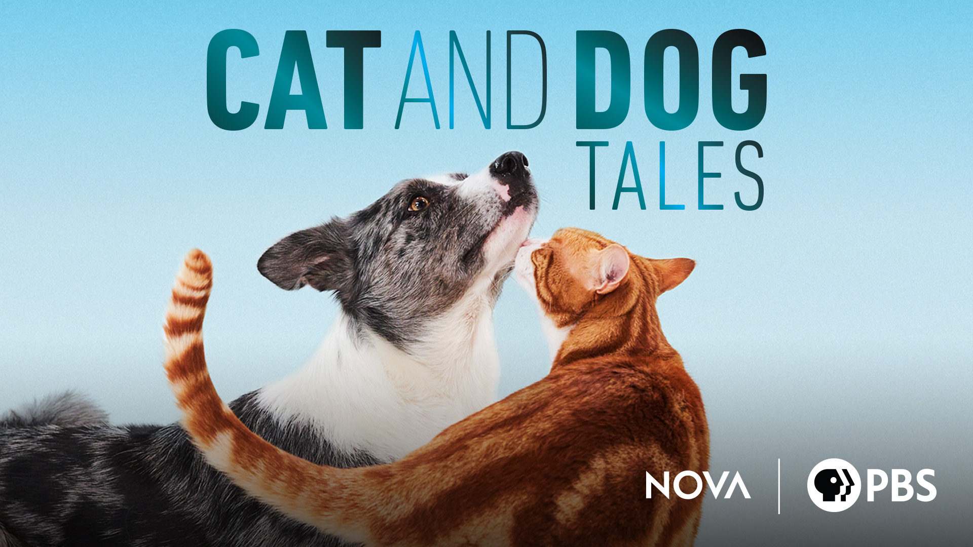 Cat and Dog Tales: Season 1