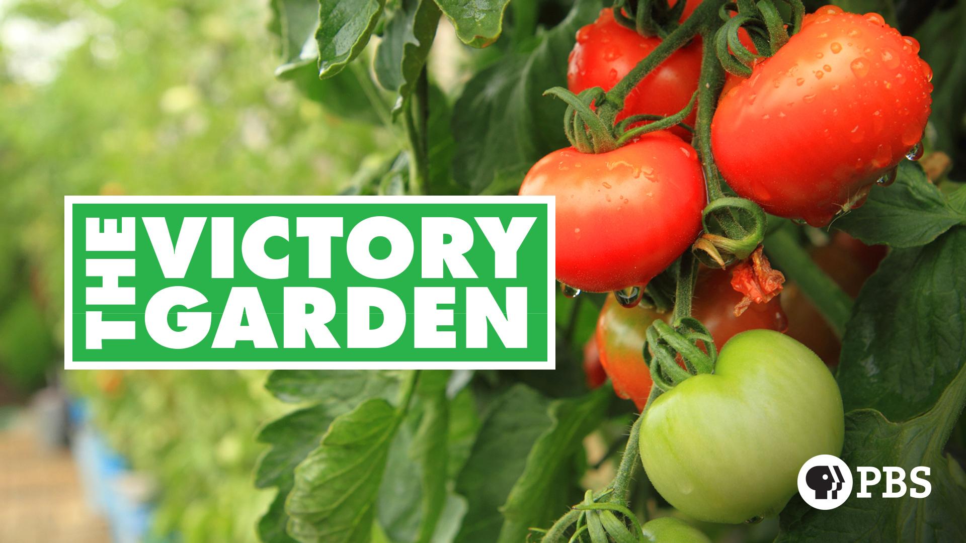The Victory Garden: Season 33