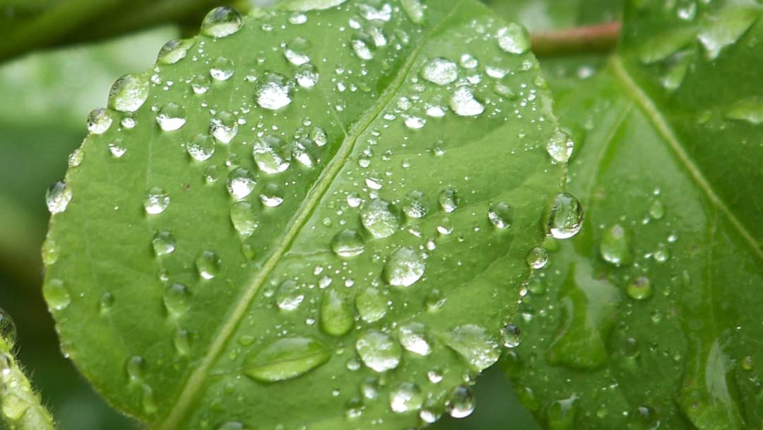 Watch Rainwater Dripping from a Leaf - 10 Hours Rain Sounds for Meditation,  Relaxation, Stress Relief | Prime Video
