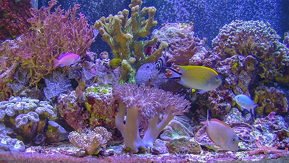Amazon.com: Aquarium for your Home - Saltwater Reef: George Ford ...