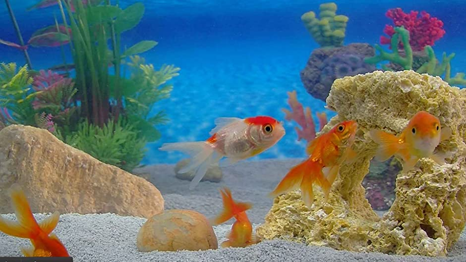 Photo collection goldfish in an aquarium for Aquarium decoration for goldfish