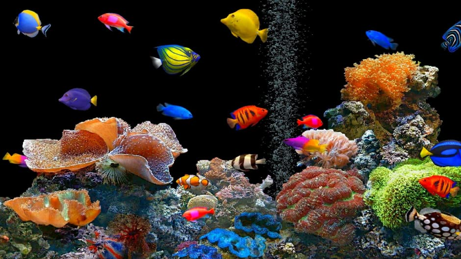 Fish aquarium gallery diagram writing sample and guide for Fish tank screen