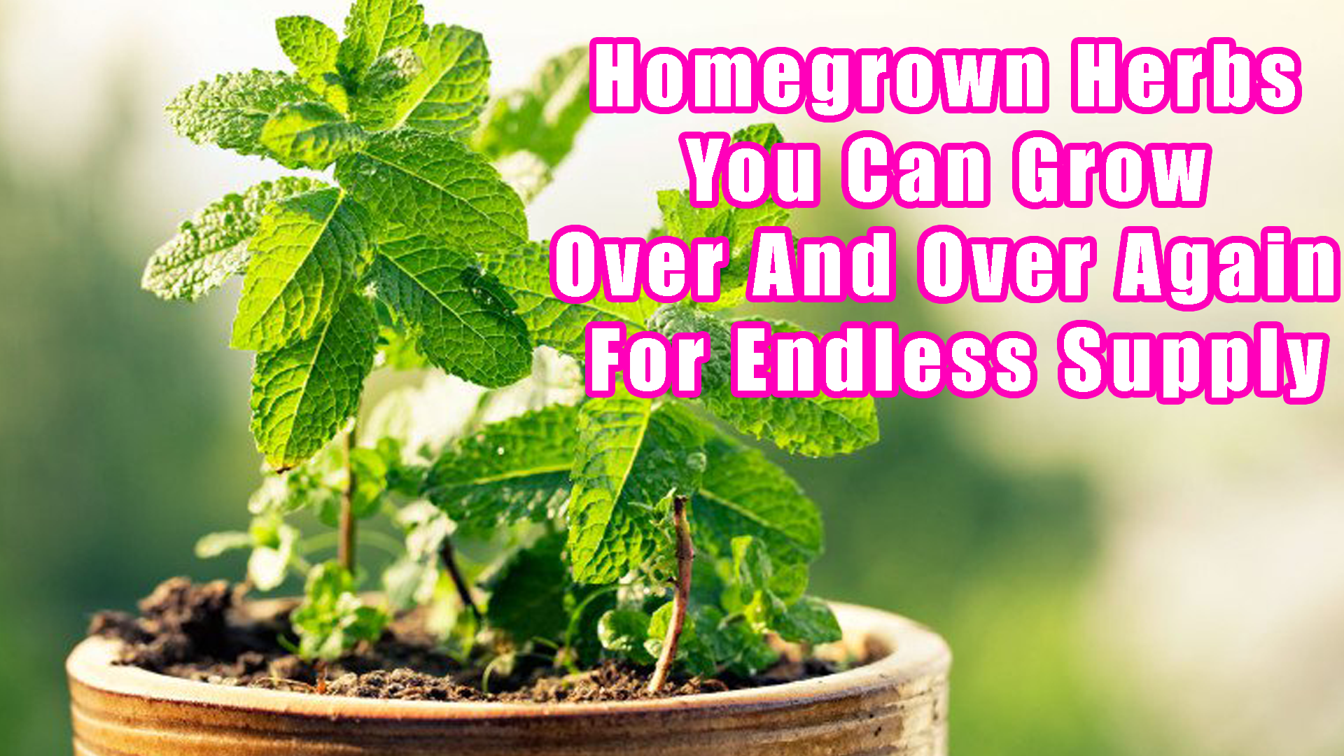 Homegrown Herbs You Can Grow Over And Over Again For Endless Supply