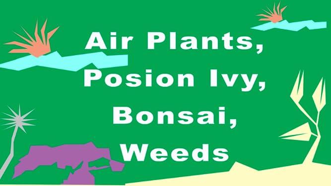 Air Plants, Poison Ivy, Bonsai, Weeds
