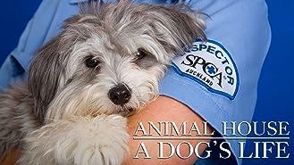 Animal House: A Dog's Life