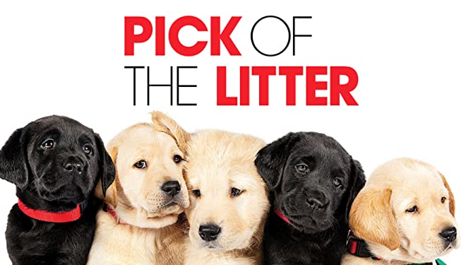 Amazon com: Pick of the Litter: Patriot, Potomac, Primrose, Poppet