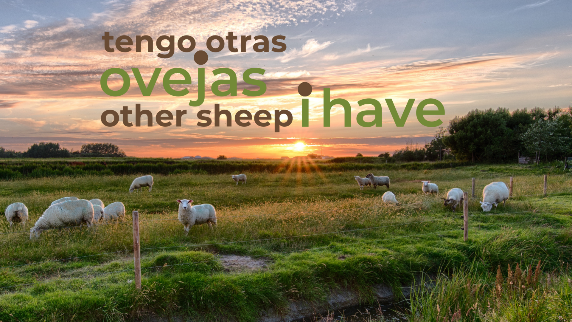 Other Sheep I Have