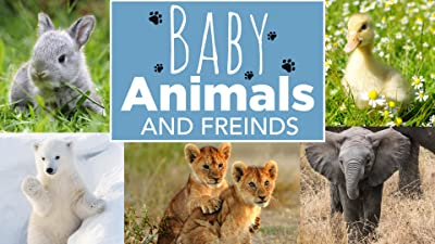 Baby Animals and Friends