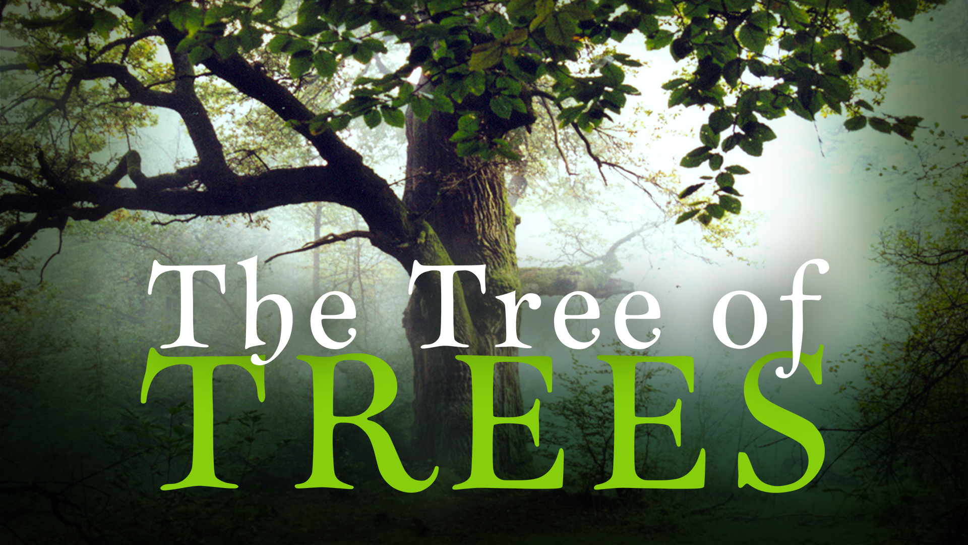 The Tree of Trees
