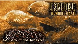 Explore The Wildlife Kingdom: Golden River, Secrets of The Amazon