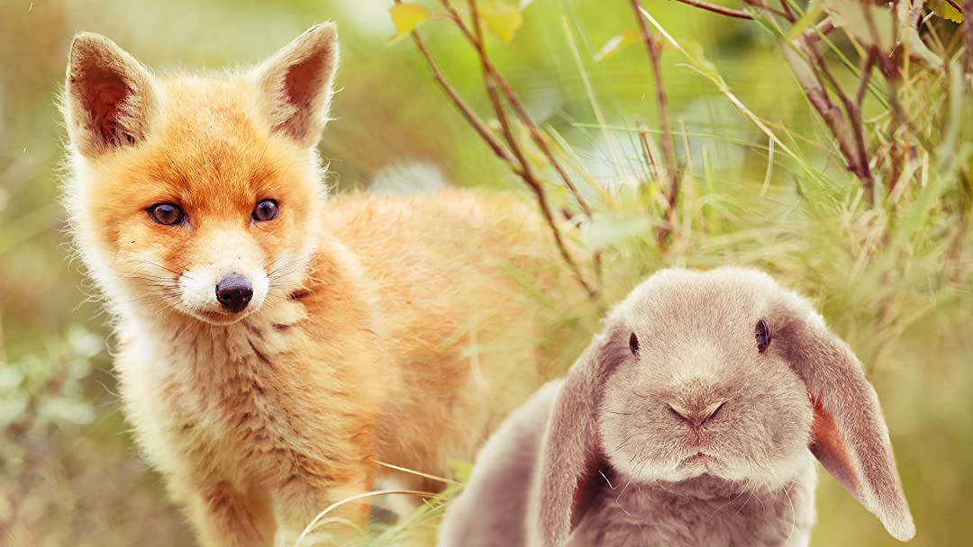 Watch The Baby Fox The Baby Rabbit Prime Video
