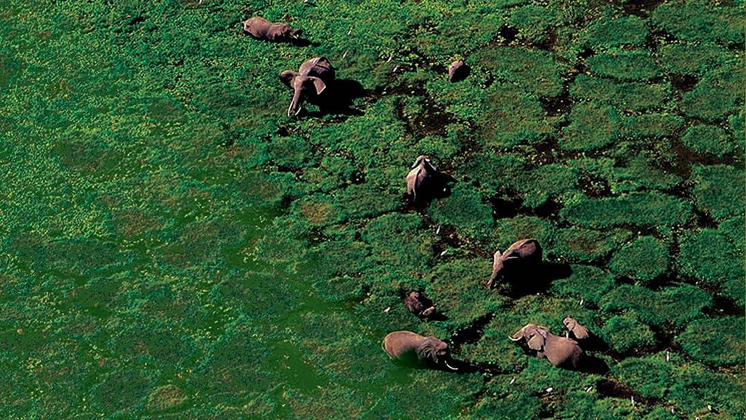 Amazoncom Earth From Above Biodiversity Yann Arthus