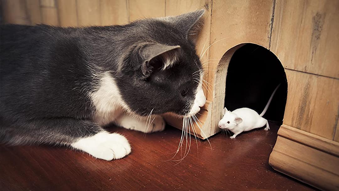 Play cat and mouse and play a game of cat and mouse Idiom ...