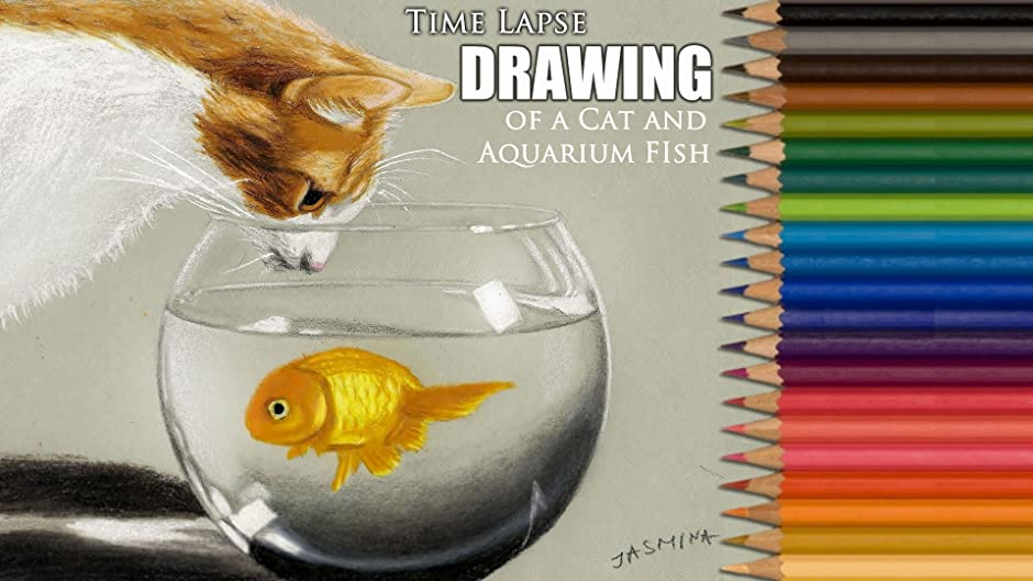 Amazon Com Clip Time Lapse Drawing Of A Cat And Aquarium Fish