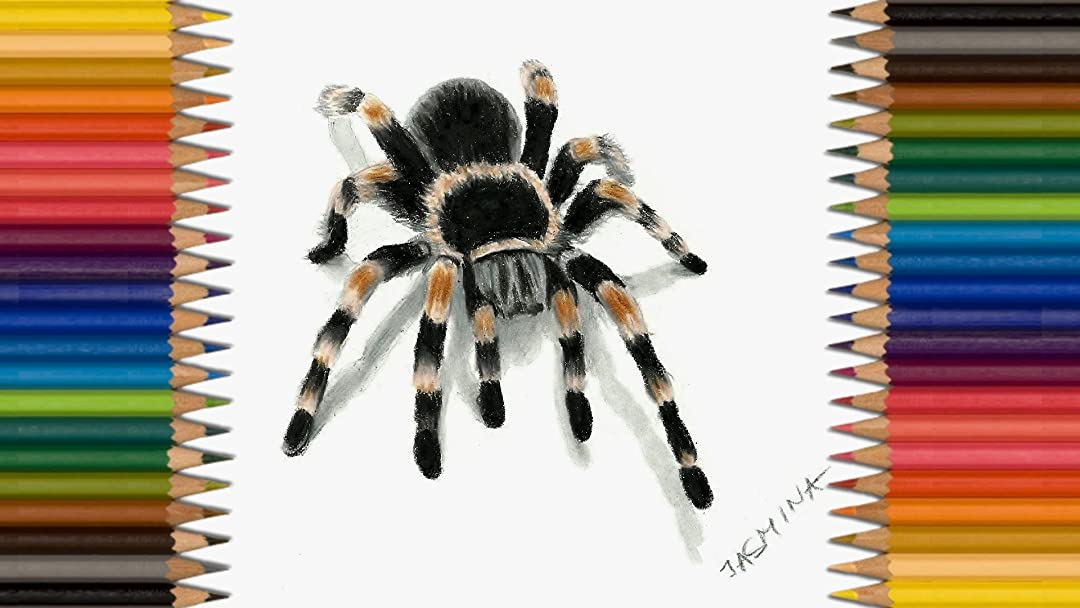 Watch Clip Time Lapse 3d Drawing Tarantula Spider Prime