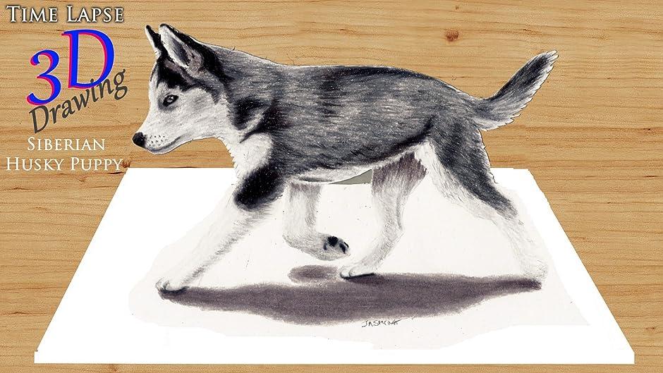 amazon com clip time lapse 3d drawing siberian husky puppy