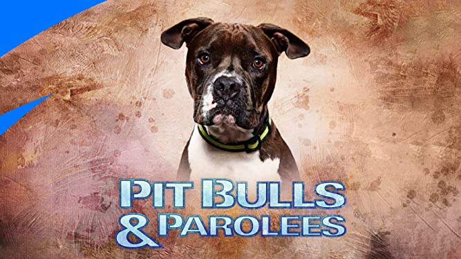 Watch Pit Bulls And Parolees Season 2 Prime Video