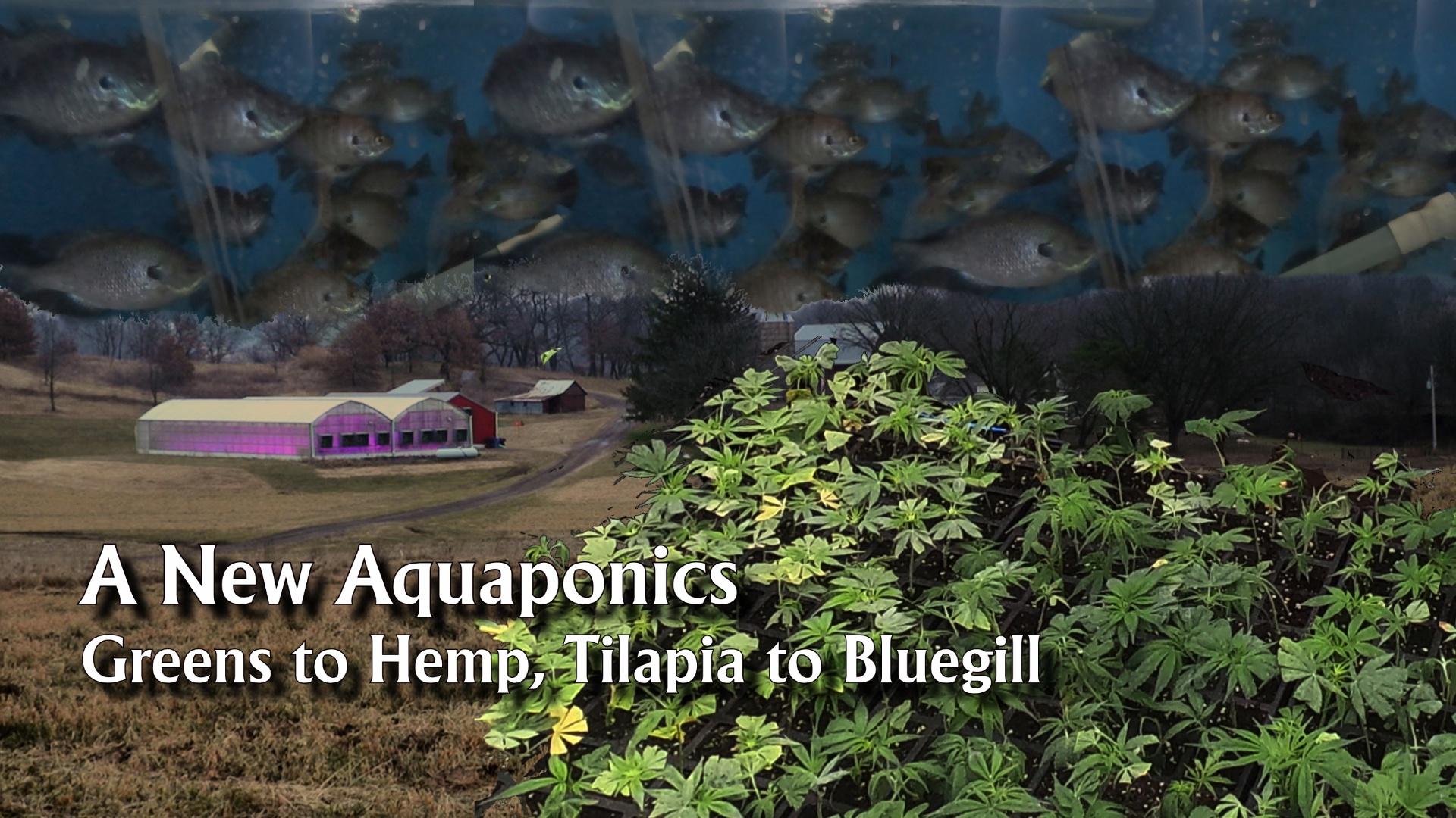 A New Aquaponics - Greens to Hemp, Tilapia to Bluegill