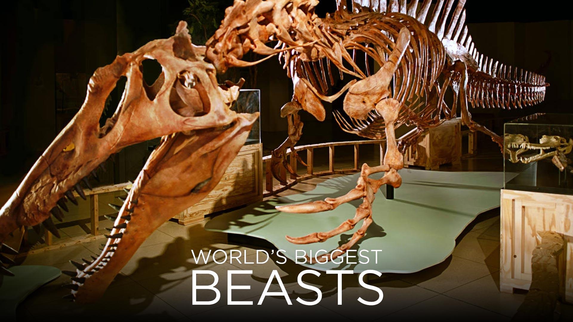 World's Biggest Beasts