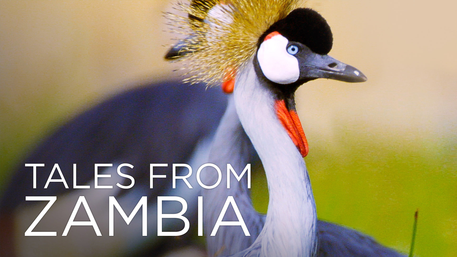 Tales From Zambia - Season 1