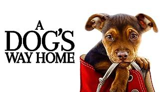 A Dog's Way Home (4K UHD)