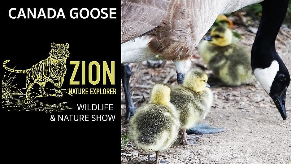 canada goose explorer