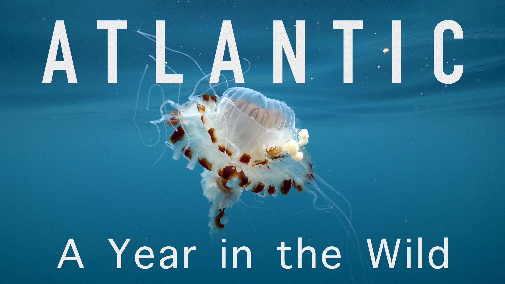 Atlantic: A Year in the Wild