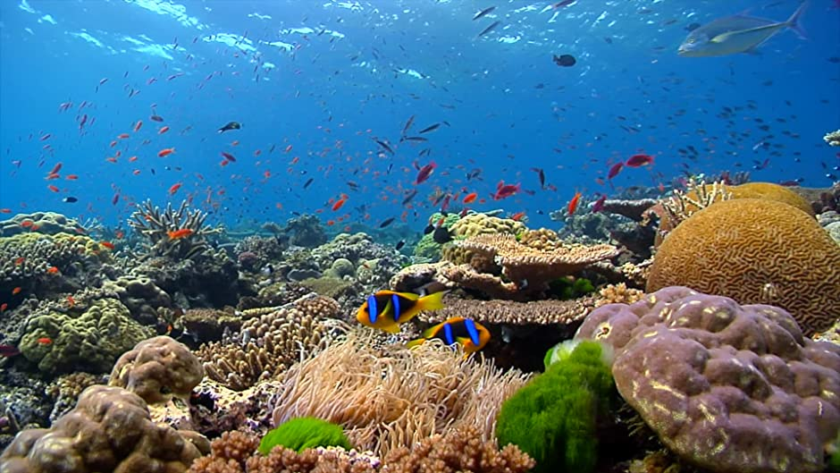 Amazon Reefscapes Natures Aquarium Coral Reefs Tropical Fish Underwater Scenery Peaceful Relaxation Digital Services LLC